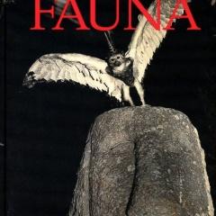 Articolo dell'autore - Fontcuberta
